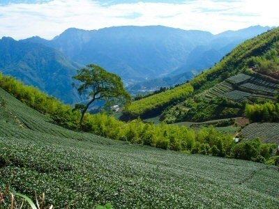 yutang-tea-story-lotus-valley